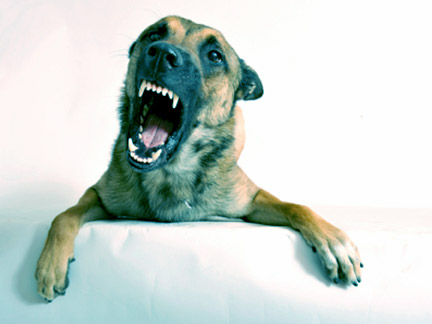 When dangerous animals attack, contact an Arlington Dog Bite Attorney to learn your rights.